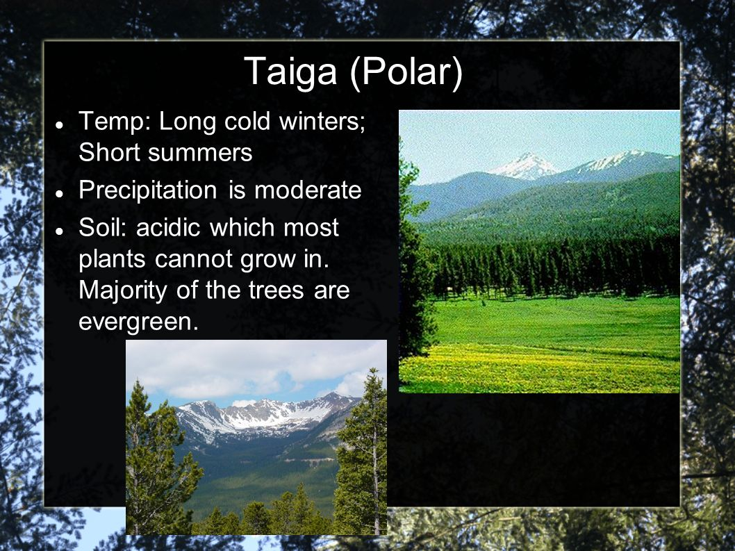 Taiga (Polar) Temp: Long cold winters; Short summers