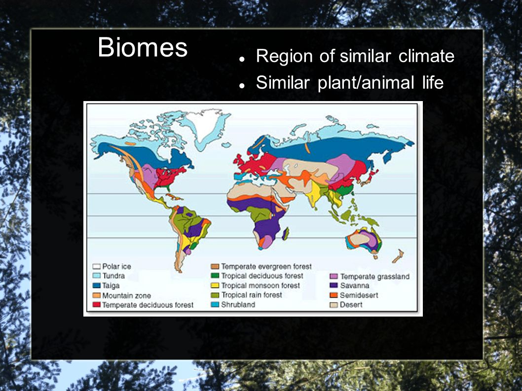 Biomes Region of similar climate Similar plant/animal life