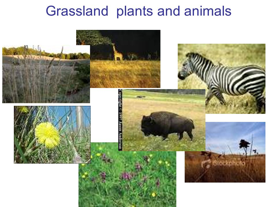 communities biomes amp ecosystems ppt download