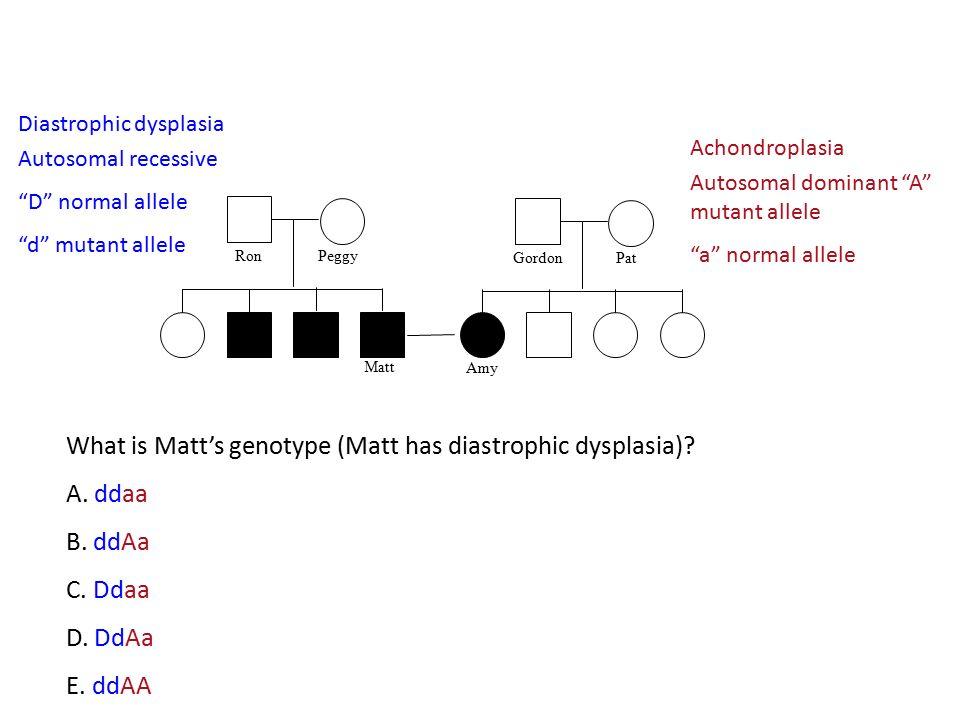 What is Matt's genotype (Matt has diastrophic dysplasia) A. ddaa