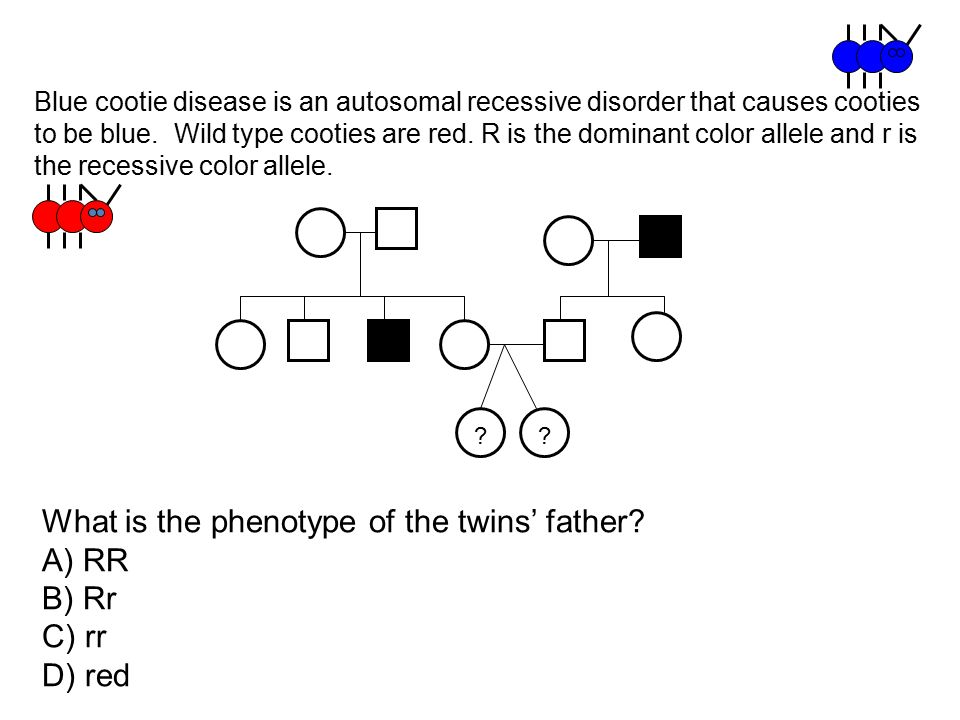 What is the phenotype of the twins' father A) RR B) Rr C) rr D) red