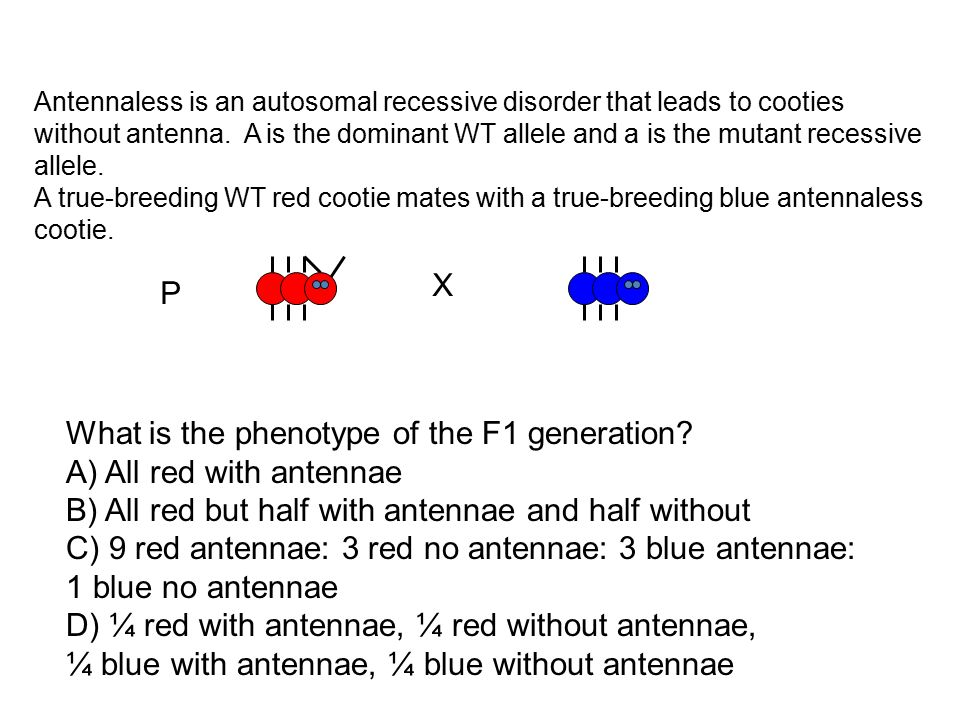 What is the phenotype of the F1 generation A) All red with antennae