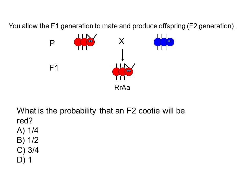 What is the probability that an F2 cootie will be red A) 1/4 B) 1/2