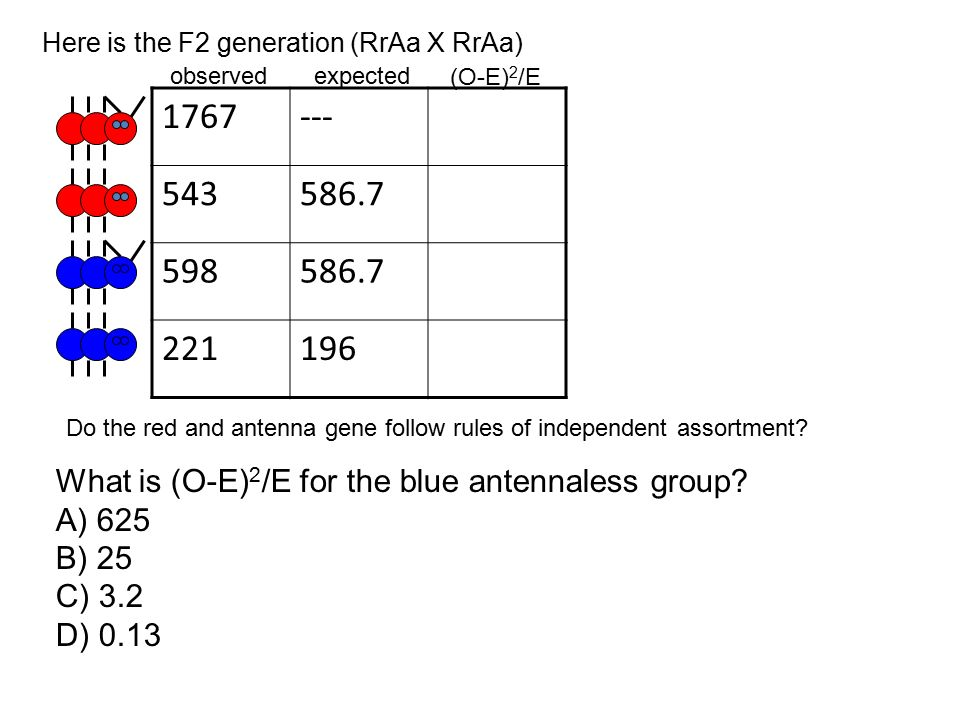Here is the F2 generation (RrAa X RrAa)