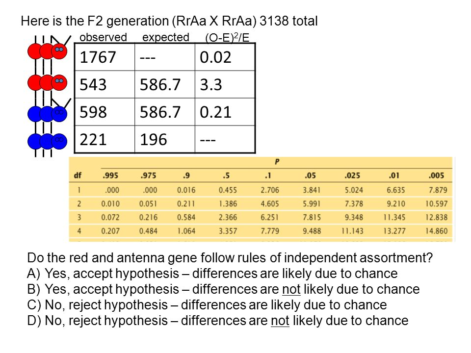 Here is the F2 generation (RrAa X RrAa) 3138 total