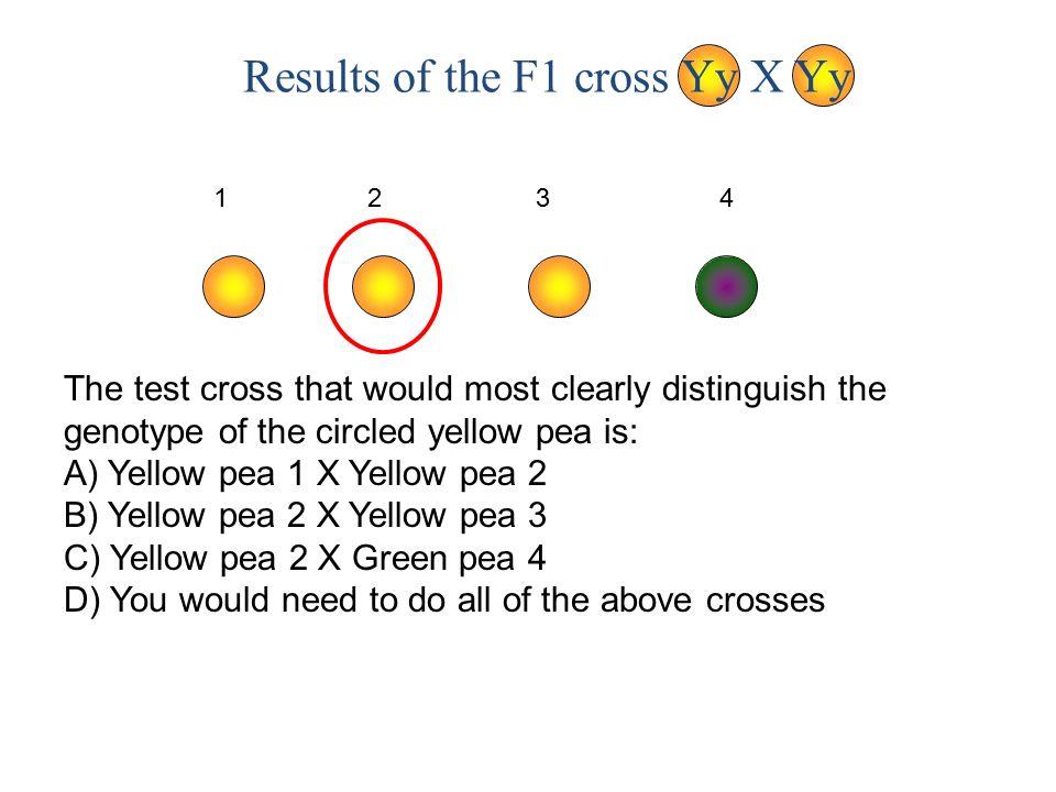 Results of the F1 cross Yy X Yy