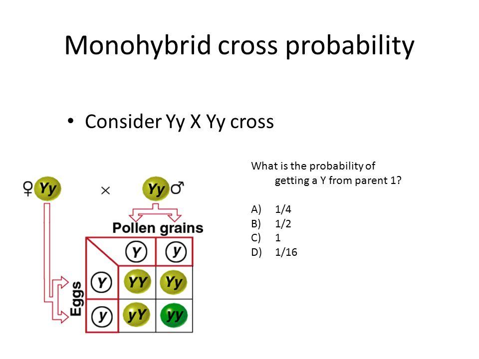 Monohybrid cross probability