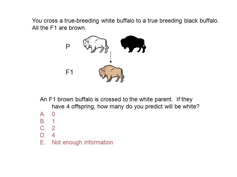 You cross a true-breeding white buffalo to a true breeding black buffalo. All the F1 are brown.