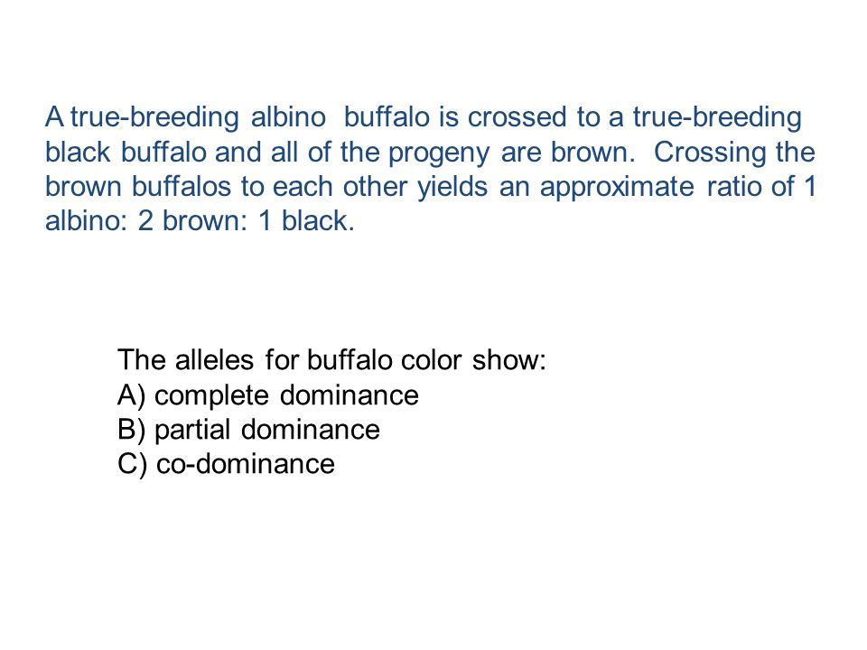 The alleles for buffalo color show: A) complete dominance