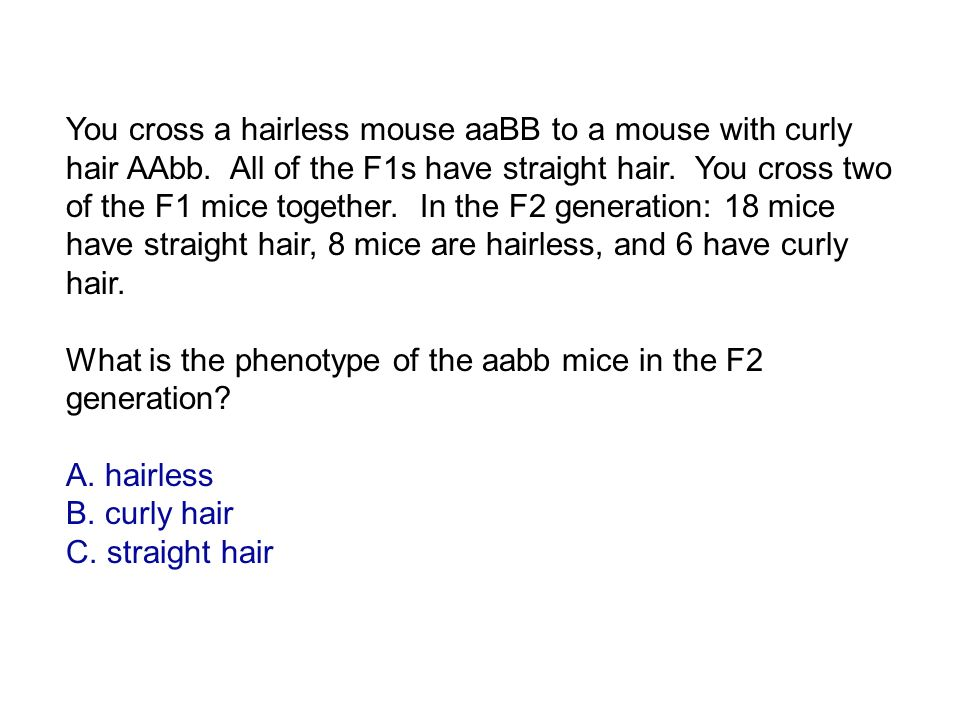 What is the phenotype of the aabb mice in the F2 generation