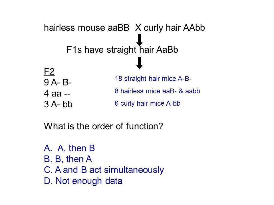 hairless mouse aaBB X curly hair AAbb F1s have straight hair AaBb F2