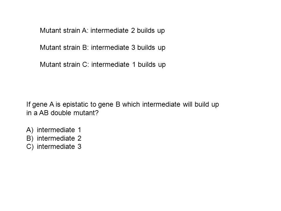 Mutant strain A: intermediate 2 builds up