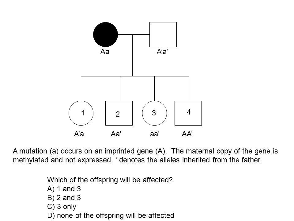 Which of the offspring will be affected A) 1 and 3 B) 2 and 3
