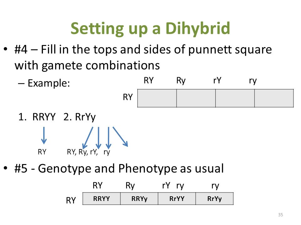 Monohybrid and Dihybrid - ppt video online download