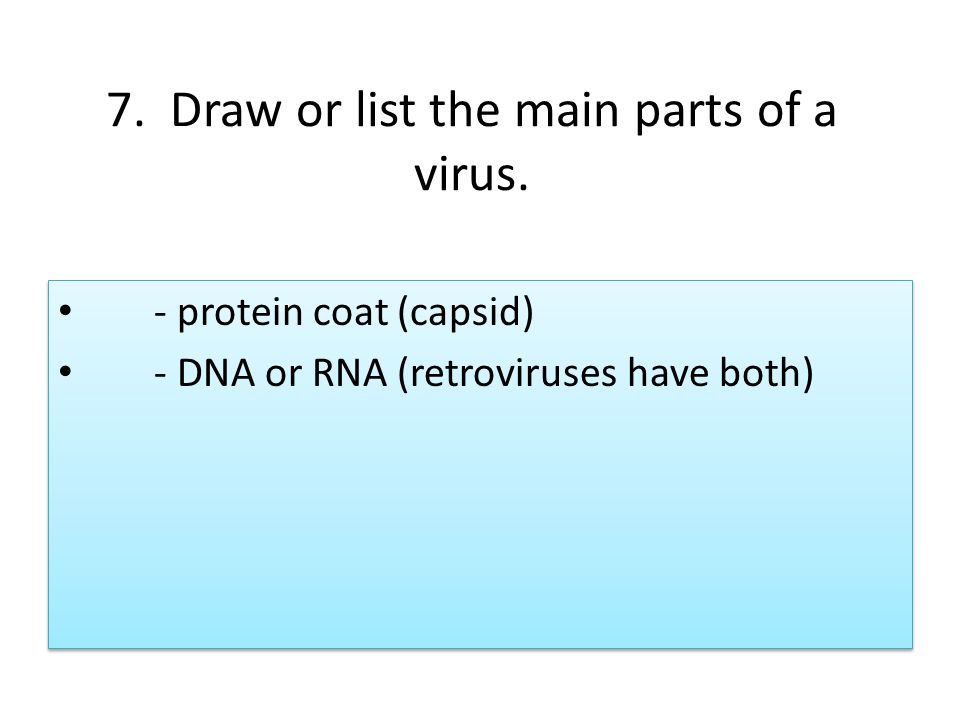Section 19 2 Viruses Unit 8 Chapter 19 Bacteria And