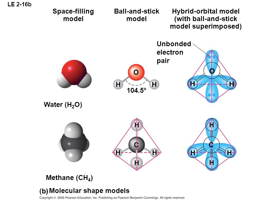 Molecular shape models