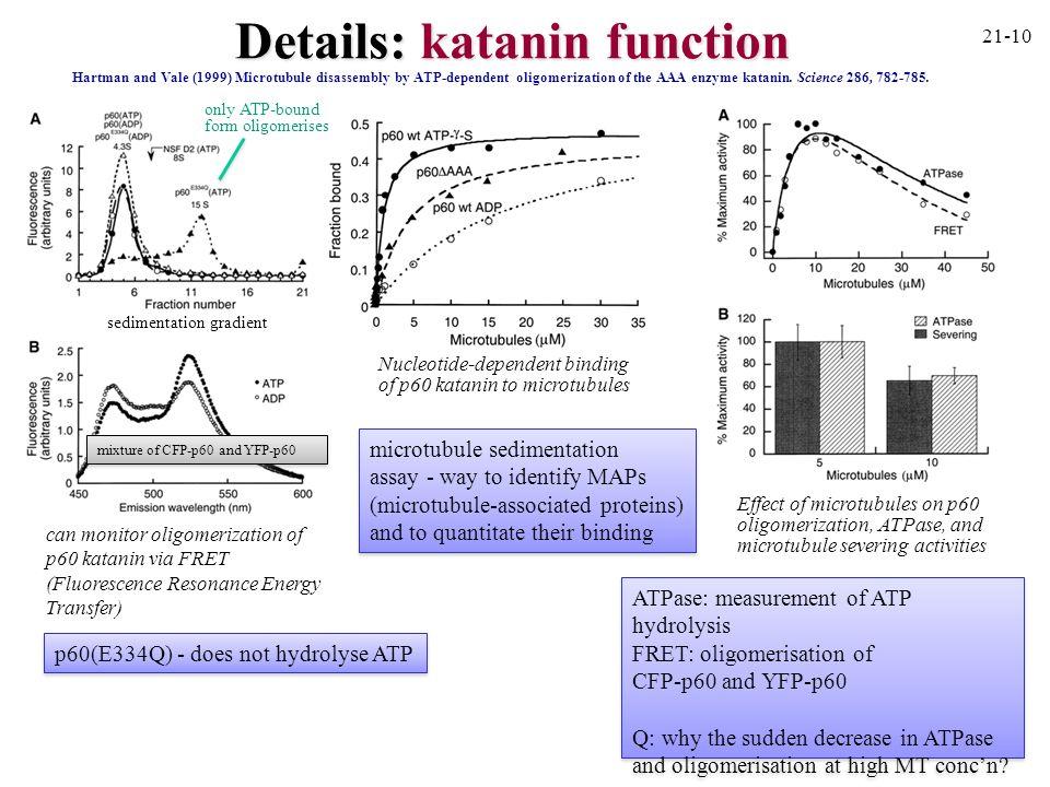 Details: katanin function