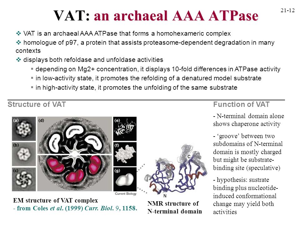 VAT: an archaeal AAA ATPase
