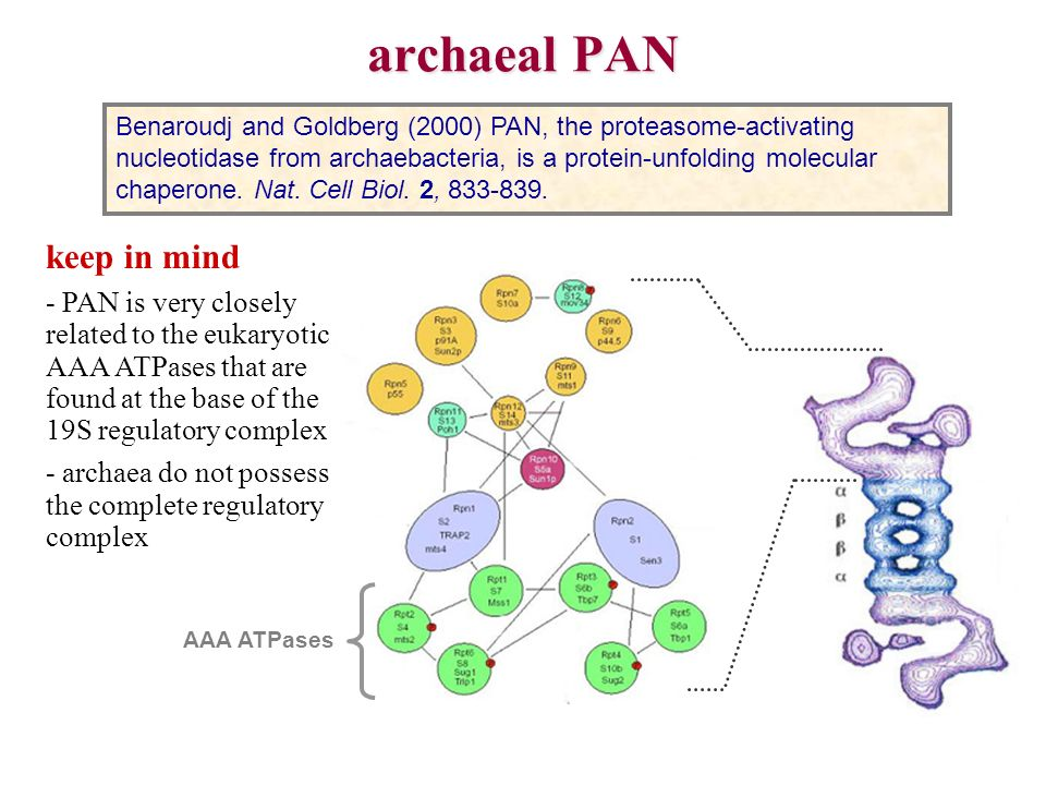 archaeal PAN keep in mind
