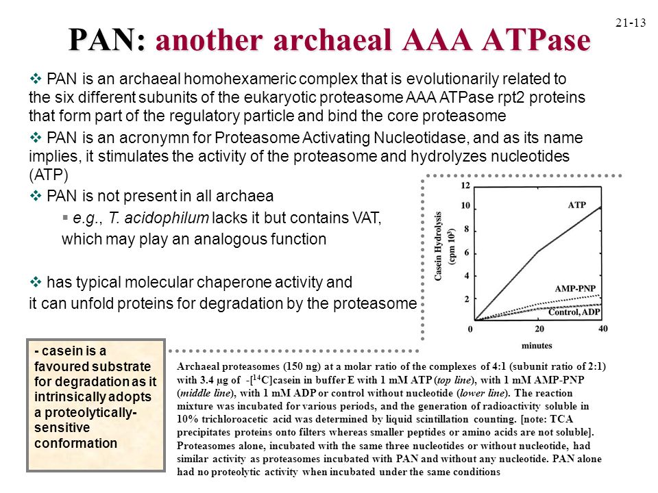 PAN: another archaeal AAA ATPase