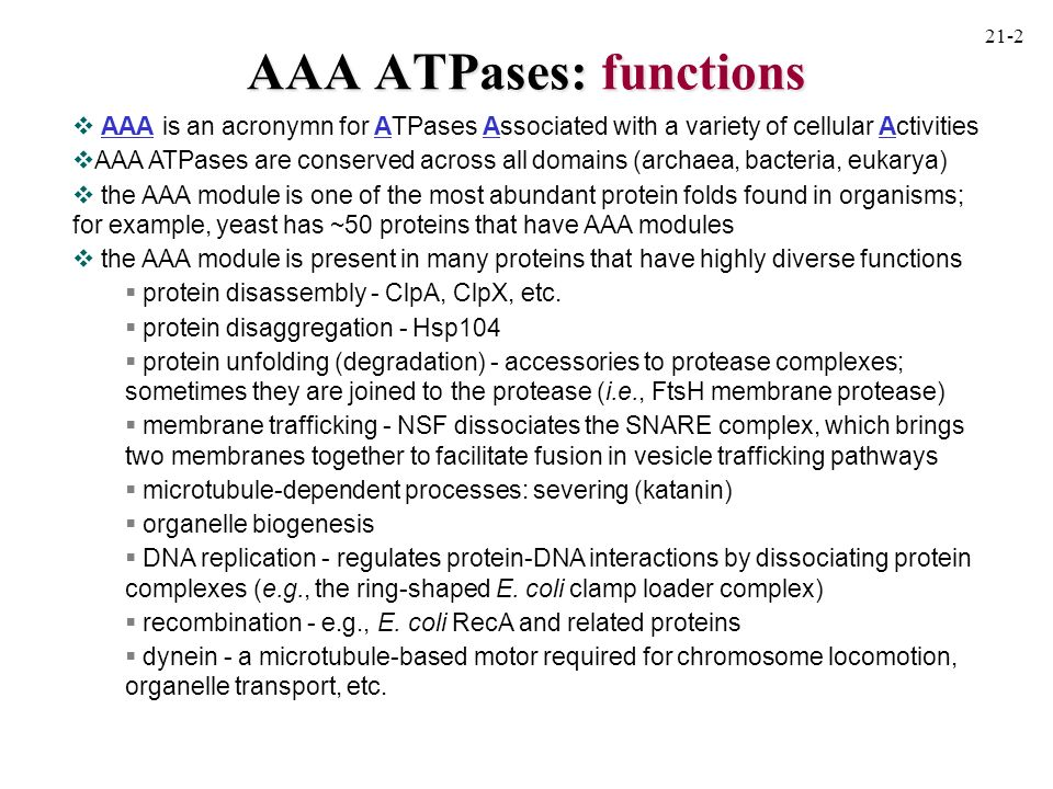 AAA ATPases: functions