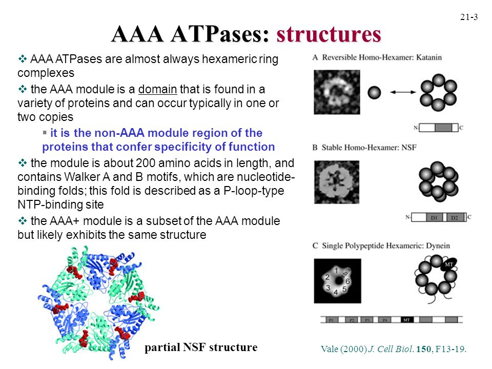AAA ATPases: structures