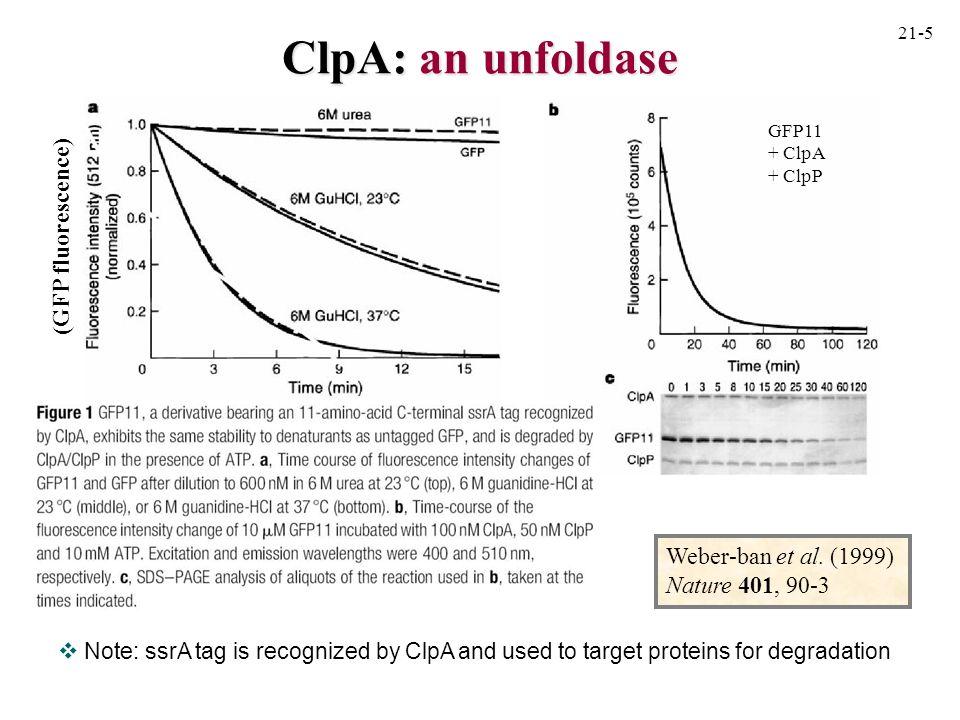 ClpA: an unfoldase (GFP fluorescence) Weber-ban et al. (1999)
