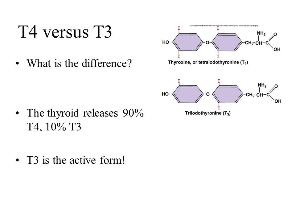 chapter 18 part 2 thyroid gland parathyroid gland adrenal