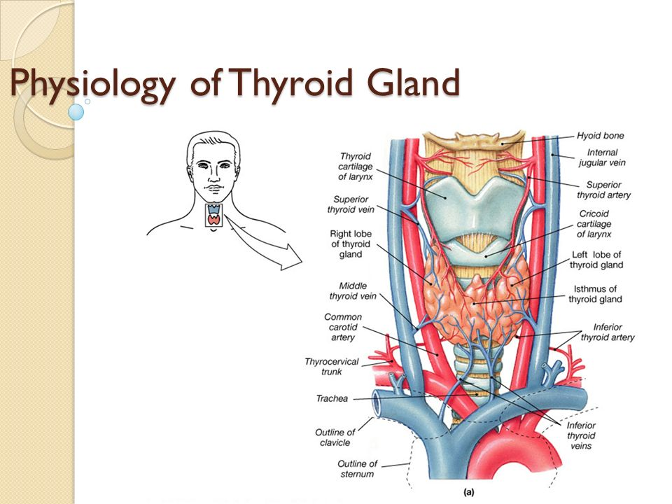 physiology of thyroid gland - ppt video online download, Powerpoint templates