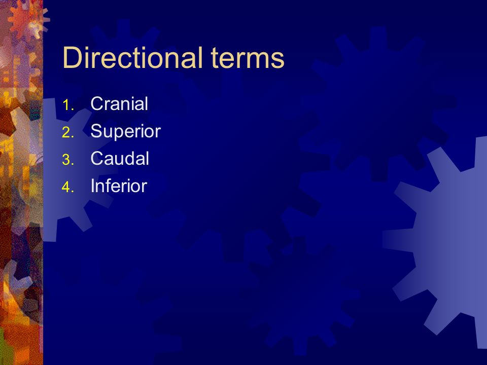 Directional terms Cranial Superior Caudal Inferior