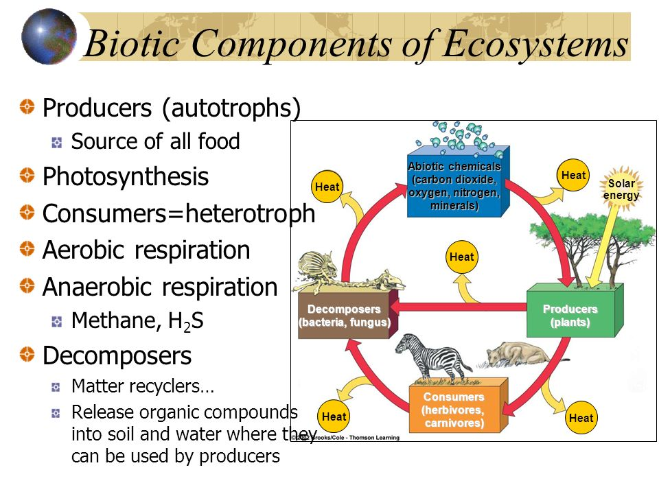 biotic components of an ecosystem 1 build background on the abiotic and biotic components of ecosystems 2 have students define abiotic factors and physical processes that impact ocean ecosystems explain to students that, in this activity, they will learn more about abiotic factors and physical processes that impact ocean.