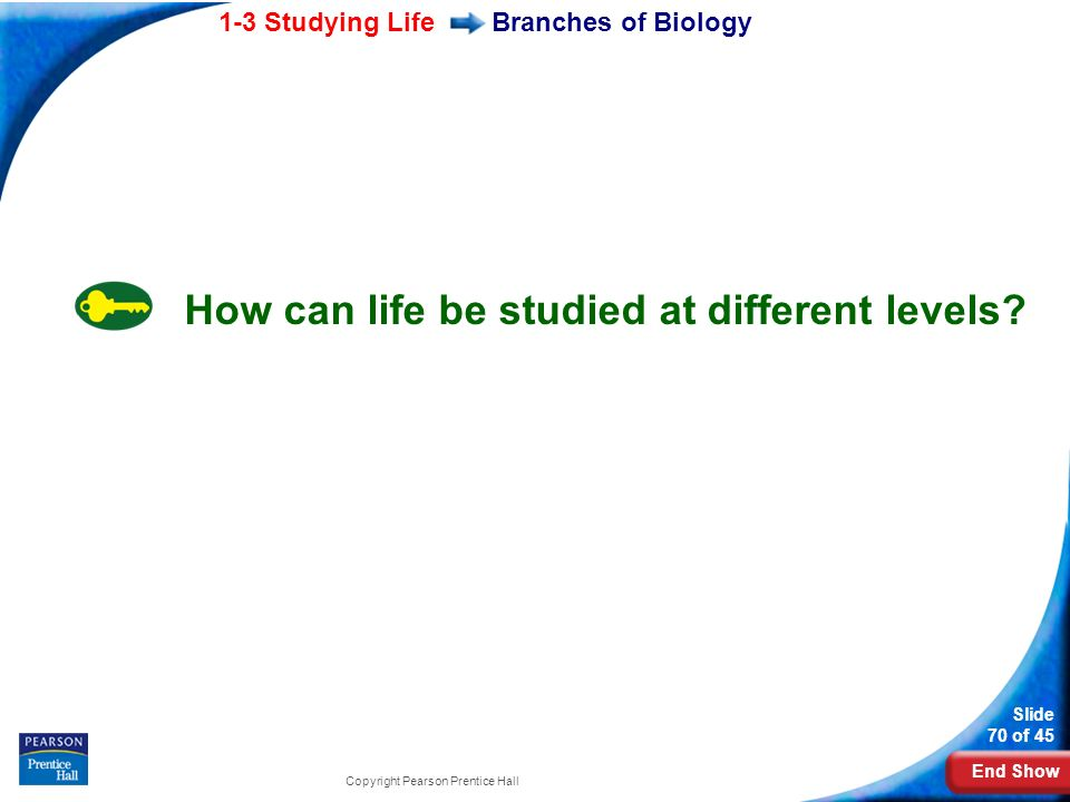 How can life be studied at different levels
