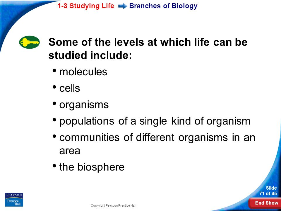 Some of the levels at which life can be studied include: molecules