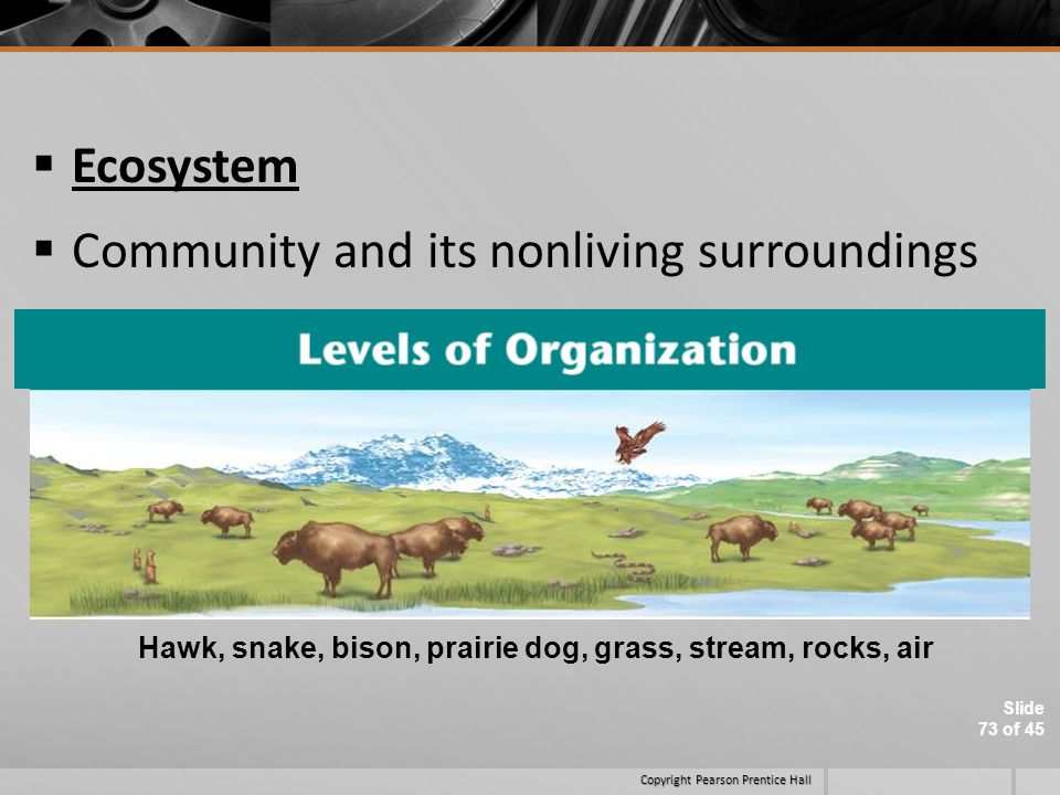 Community and its nonliving surroundings