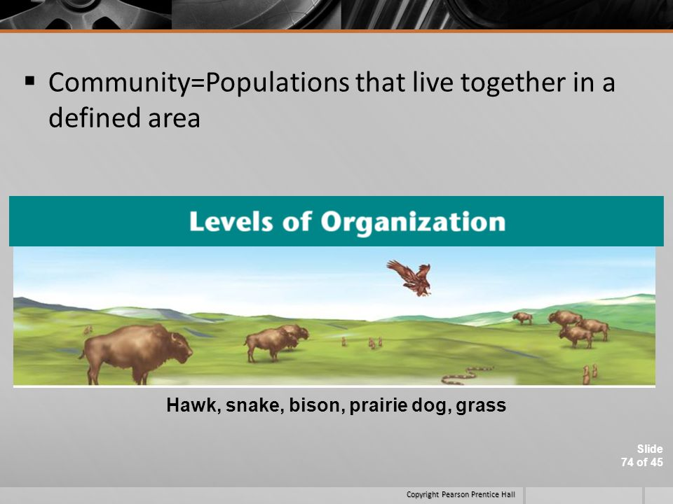 Community=Populations that live together in a defined area