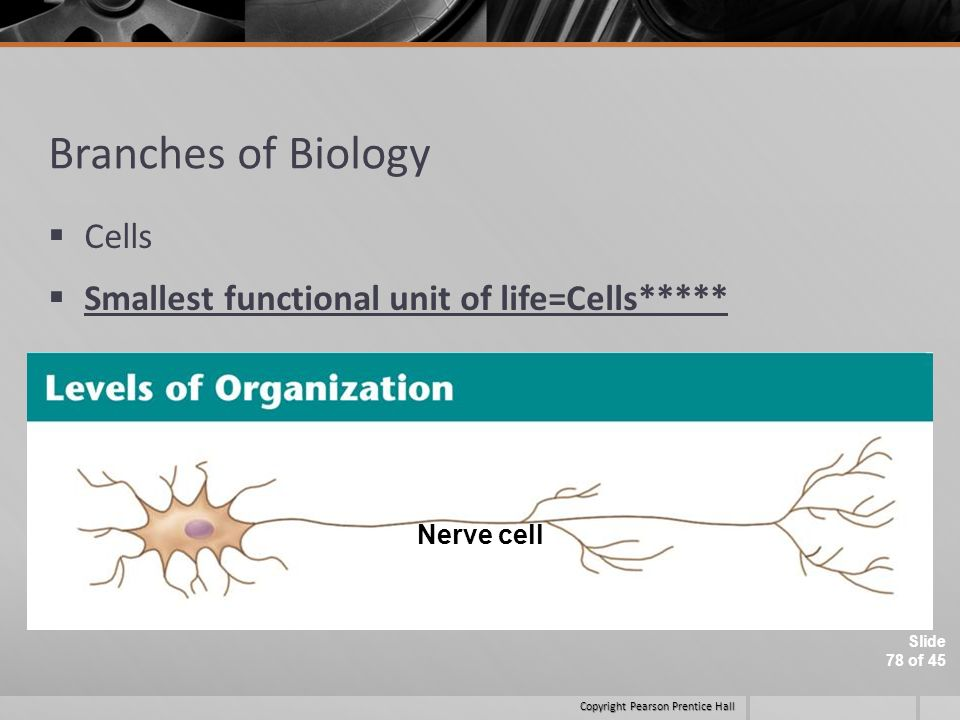 Branches of Biology Cells Smallest functional unit of life=Cells*****