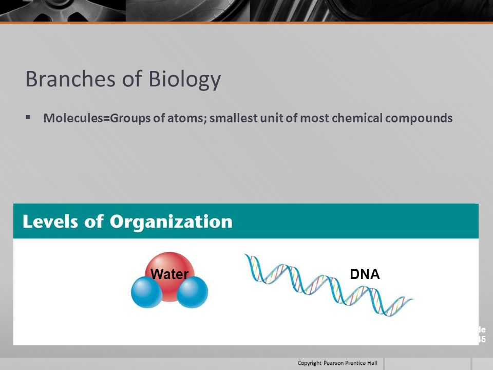 Branches of Biology Molecules=Groups of atoms; smallest unit of most chemical compounds.