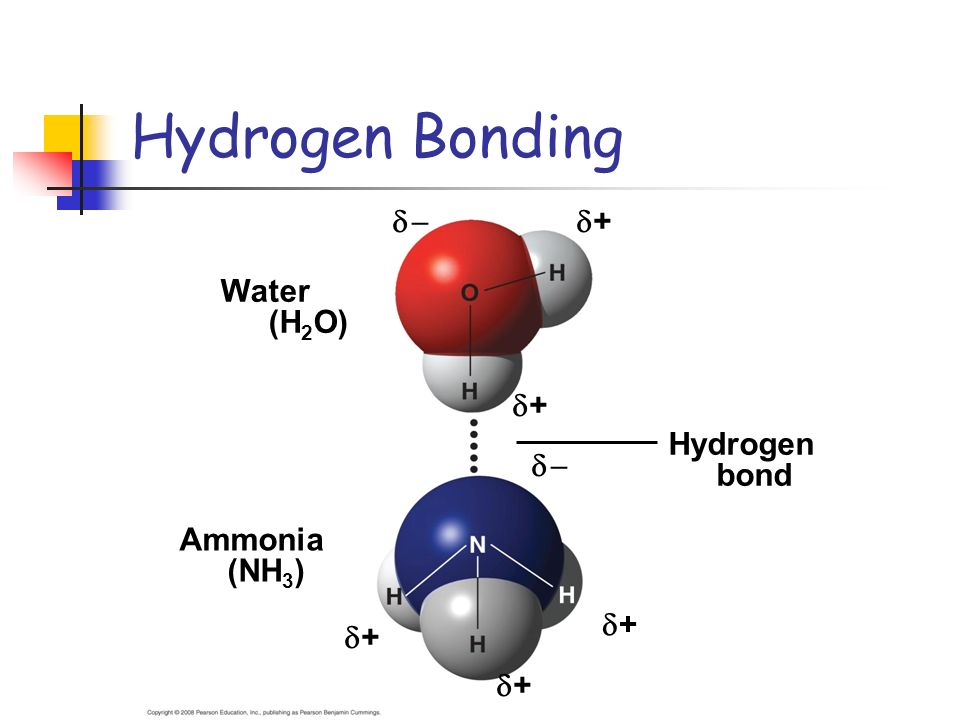 Hydrogen Bonding   + Water (H2O) Ammonia (NH3) Hydrogen bond