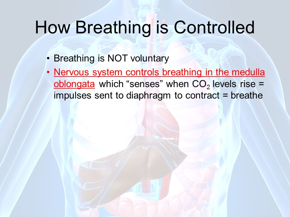 How Breathing is Controlled