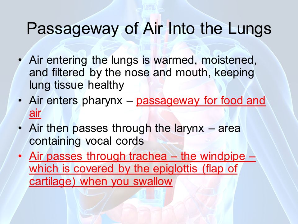 Passageway of Air Into the Lungs