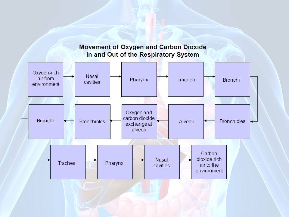 carbon dioxide exchange at