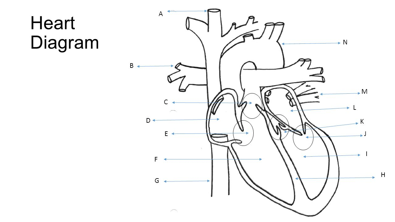 circulatory  respiratory test review