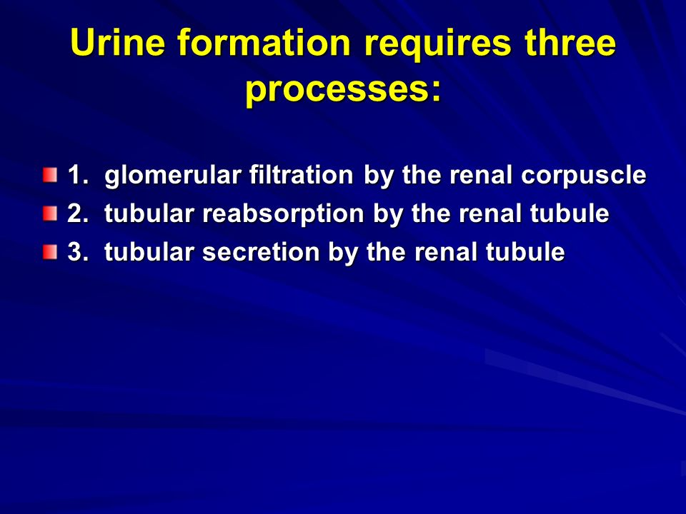 3 processes of urine formation