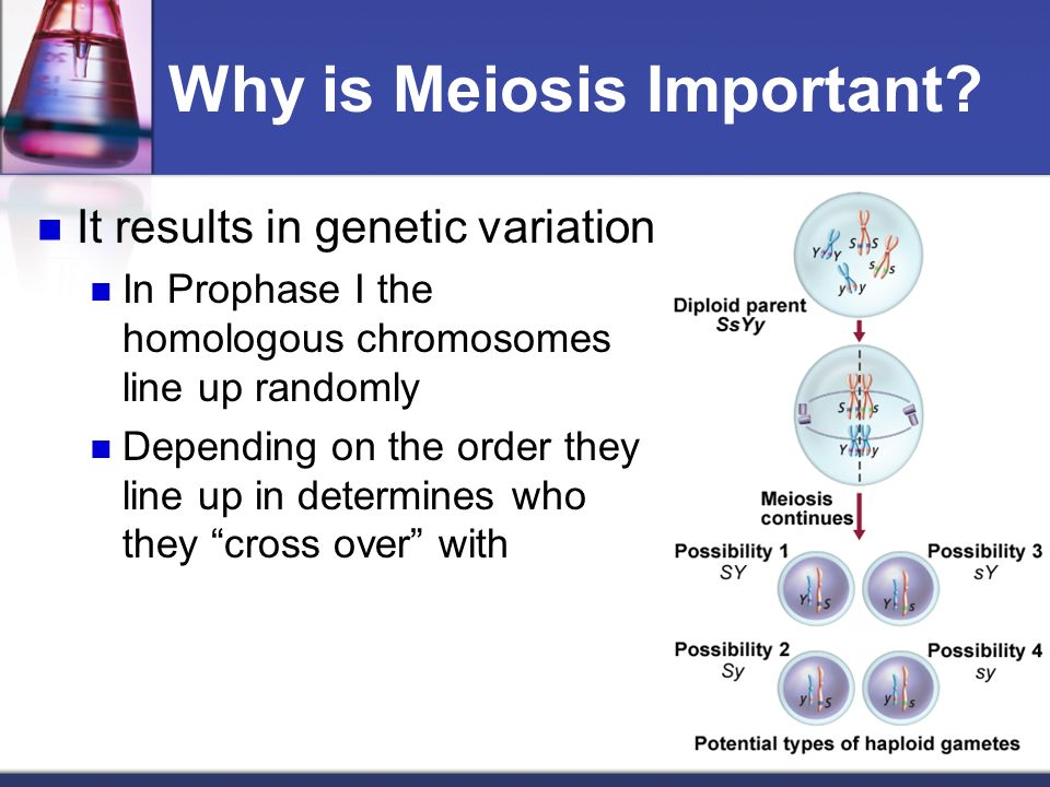 Why is mitosis a form of asexual reproduction images 72