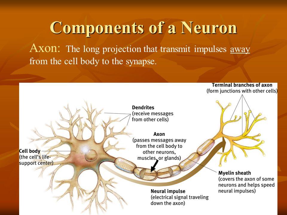 Friday February 28 Neural Communication Quiz On Nervous