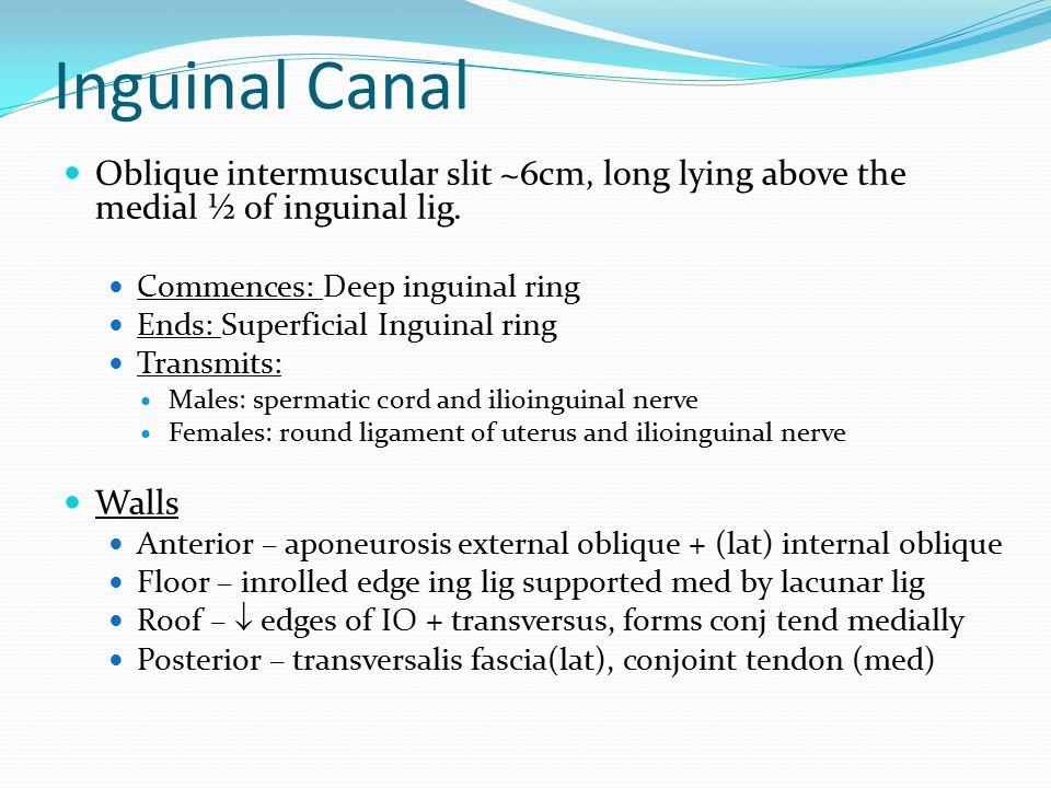 Inguinal Canal Oblique intermuscular slit ~6cm, long lying above the medial ½ of inguinal lig. Commences: Deep inguinal ring.