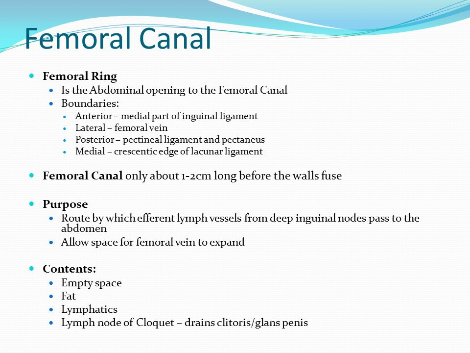 Femoral Canal Femoral Ring