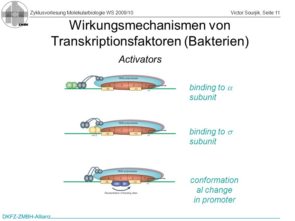 Wirkungsmechanismen von Transkriptionsfaktoren (Bakterien)