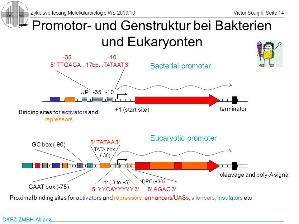 Promotor- und Genstruktur bei Bakterien und Eukaryonten