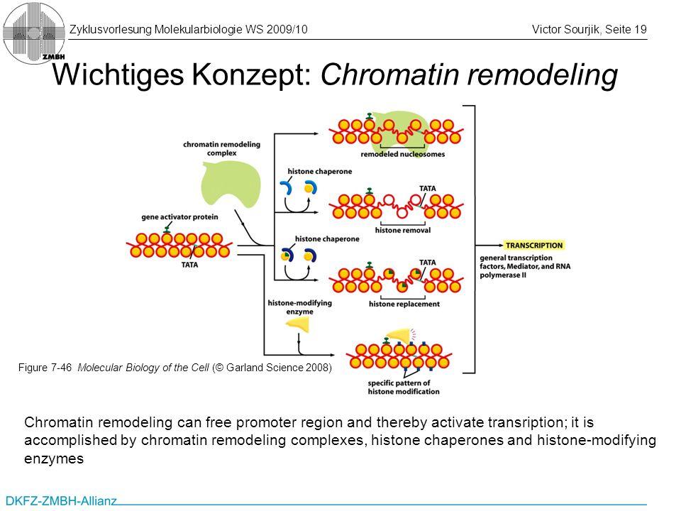 Wichtiges Konzept: Chromatin remodeling